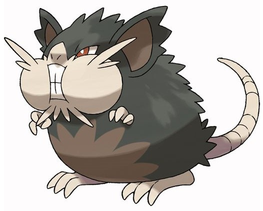 raticate pokemon